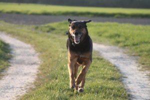 Anka - unser erster Familienhund.