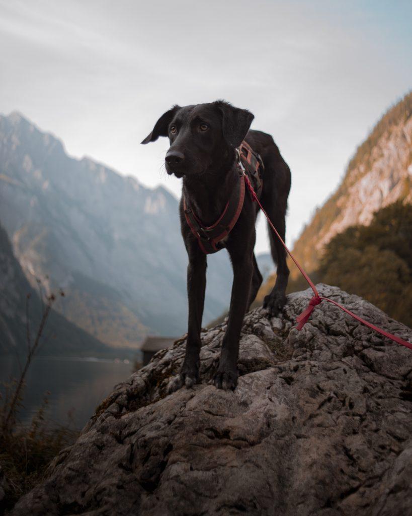 Schutzhund, Urlaub mit Hund, Königssee, Obersee, Urlaub in Bayern, Urlaub mit Hund, Ruhpolding