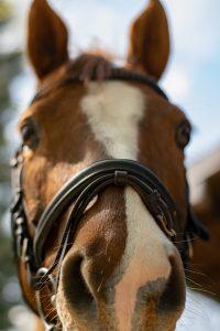 Pferd, Brendlberg, Gestütshof Brendlberg, Urlaub in Ruhpolding, Urlaub mit Hund, Chiemgau, Ruhpolding