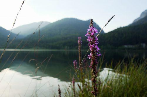 Der Weitsee - wunderbarer Bergsee im Chiemgau